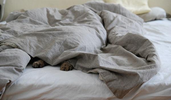 cosy-bed