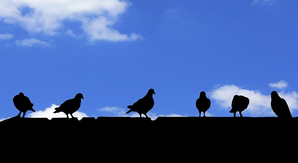 birds-on-roof