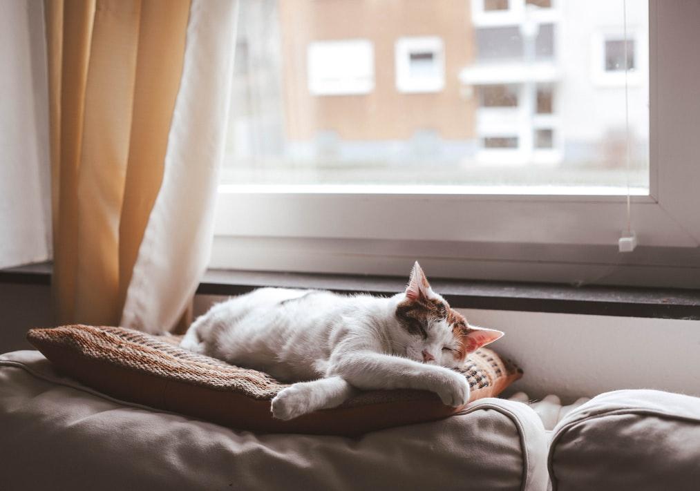cat-warm-sofa-home